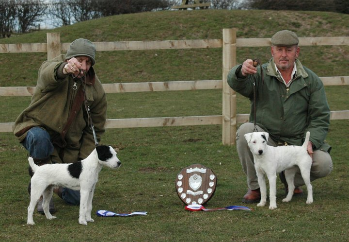 Best Russell Puppy (right) & Reserve